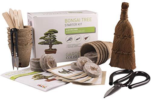 KIT BONSAI ¡CULTIVA TUS PROPIOS ÁRBOLES Kit de germinación bonsais SET  REGALO DE JARDINERÍA Con ce99d8fe3803
