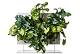 Ortisgreen HOH. + Support de Table by, Cadre végétale de Couleur Blanc avec Support de Table en Fer Verni Blanc, Substrat Naturel et Instructions incluses