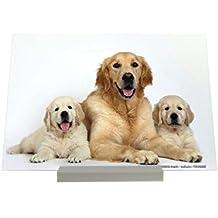 Soporte impresión del arte Fotografias Raza Golden Retriever cachorro de perra Letrero Decoración