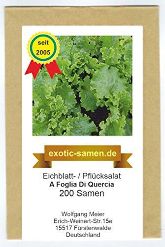 Eichblatt- / Pflück-Salat - A Foglia Di Quercia - schnellwüchsig - 200 Samen