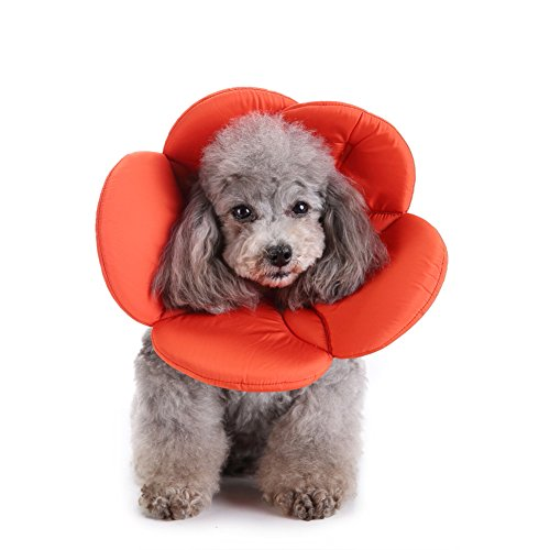Steellwingsf Collar médico Mascotas Perro Forma Flor