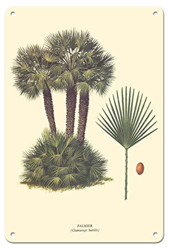 Pacifica Island Art - 22 x 30 cm Metallschild - Zwergpalme - (Chamaerops Humilis) - Retro Botanische Illustration von Ferry c.1967