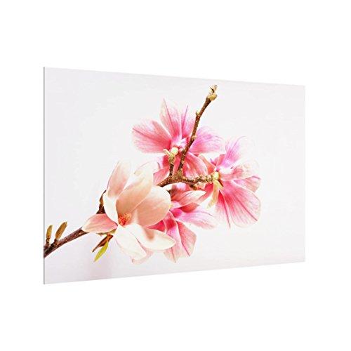 Spritzschutz Glas - Magnolienblüten 40 x 60 cm Küchen Sicherheitsglas (Wandverkleidungen Für Bäder)