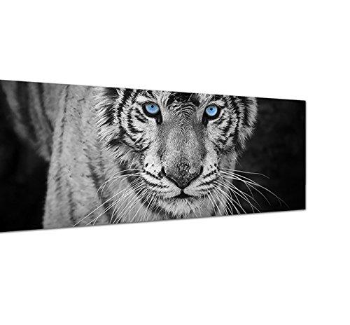 Leinwandbild als Panorama in 150x50cm Tiger Wildkatze Nahaufnahme schwarz/weiß