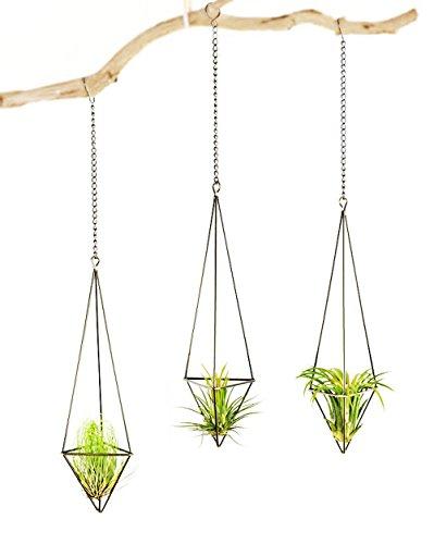 Mkouo 3 Stück Luftpflanzen Hängenden Metall Luft Pflanze Halter Topf Container Dekoration - Bronze