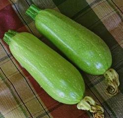 "JustSeed Zucchini""Clarion F1″, 8 Samen"