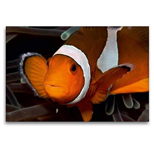 Calvendo Premium Textil-Leinwand 120 cm x 80 cm quer Portrait Clownfisch | Wandbild, Bild auf Keilrahmen, Fertigbild auf echter Leinwand, Leinwanddruck: Soll Clownfisch vor der Kamera Tiere Tiere