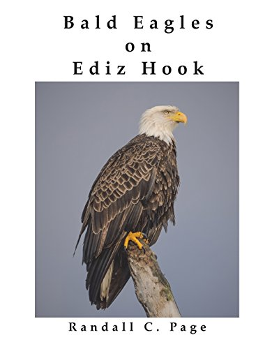 Bald Eagles on Ediz Hook