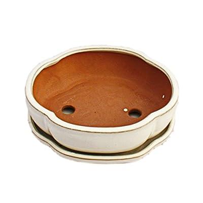 Bonsai-Schale mit Unterteller Gr. 3 - hellbeige - haitang/oval - Modell I5 - L 17cm - B 14cm - H 5,5cm von Exotenherz bei Du und dein Garten