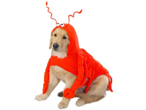 Artikelbild: Casual Canine Lobster Paws Dog Costume, Small (fits lengths up to 12), Red-Orange by Casual Canine