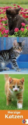 Katzen long 2014