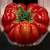 Portal Cool 3: Home Gardening Gemüse Obstpflanze Frische Große Tomatensamen Er99