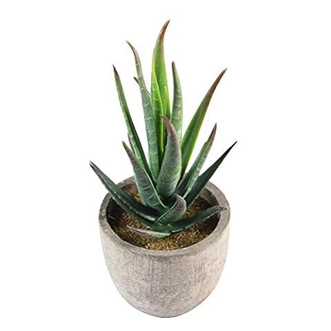 WINOMO Künstliche Pflanz klein Kunstpflanzen Kunstblume Deko mini Sukkulenten Tischdeko (Aloe)
