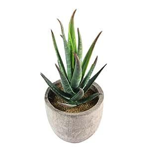 WINOMO Plantes décoratives officinales Succulentes plantes succulentes artificielles fausses avec pot gris