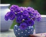 AGROBITS 24 diversi tipi di fiori della pianta dei bonsai Seedss coperta in vaso Seedsplants Esotico suculenta Seedsflower per la decorazione del giardino: 100 Fiordaliso