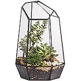 Maceta de 25 cm de altura, hecha de vidrio, diseño irregular, para plantas carnosas, helechos y musgo