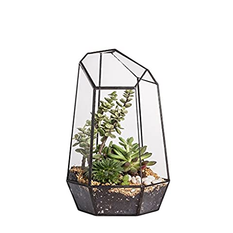 25cm Height Irregular Prism Glass Geometric Terrarium Tabletop Box Flower Pot Planter Large Tall for Succulent Plant Fern