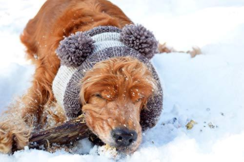 Bär Snood für Hunde Pompon Wolle Hand gestrickt Hund Hut Schal Winter Hundezubehör Ohrabdeckungen Strickhalswärmer Hund Krawatten Hund Halswärmer Geschenk