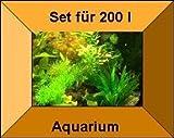 10 Töpfe + 10 Bund Wasserpflanzen, Aquarienpflanze