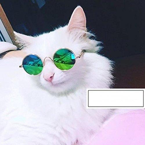 daynecety Pet Sonnenbrille Hunde Katzen Gläser Brillen Sonnenbrille Eyewear Fotos Requisiten Dekoration