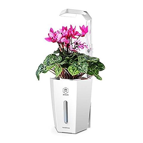 Système de culture hydroponique Plante en plastique Pot de fleurs jardin Home Office Decor Self Waltering Pot de fleurs