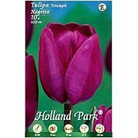 Holland Park bulbi da fiore di molte varietà e colori in sacchetto blister con foto (TULIPANI NEGRITA 10 bulbi)