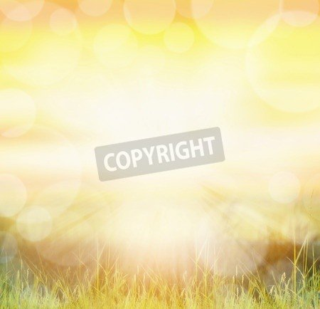 """Poster-Bild 60 x 60 cm: """"Sunny nature background with bokeh and sun rays on grass"""", Bild auf Poster"""