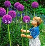 Generic Seltene blume, 20 teile/beutel Riesige Zwiebel (Allium giganteum) samen schÃne blume bonsai pflanze hausgarten kostenloser versand