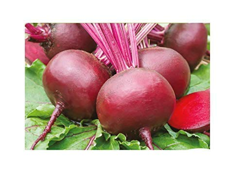 250x Rote Rübe Ägyptische plattrunde EKO - Rübensamen Gemüse Garten K391