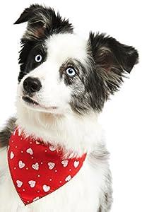 Animal Domestique TOUTOU Boutique Patchwork Hearts Bandana pour Chien, XS/S, Rouge