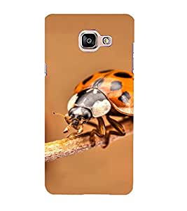 Blue Throat a beautifull lady bug picture Back Case Cover for Samsung On7 (2016) New Edition For 2017 :: Samsung Galaxy On 5 (2017)