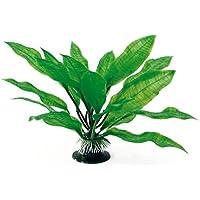 Wave Echinodorus Bleheri planta clásico, tamaño mediano