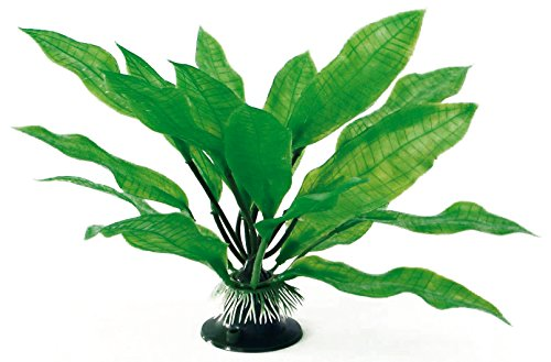wave-echinodorus-plante-classique-pour-aquariophilie-taille-m