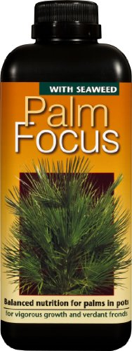 palm-focus-fertilizzante-liquido-concentrato-da-1-litro