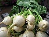 PlenTree Semi Online Legend giardino Rapa Shogoin Dgs706 (bianco) 1000 sementi biologiche