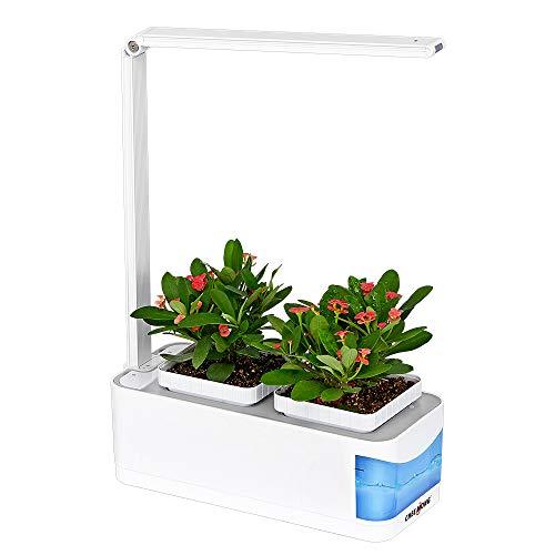 Intelligente Hydroponik-Gartenbeleuchtung, Indoor-Garten-Kit mit Schreibtischlampenfunktion, LED-Pflanzenlicht, Mini-Indoor-Garten-System für Kräutersalat-Gemüseblumen - Samen nicht enthalten (blau)