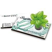 Eco-Postcard | Biglietto d'auguri segno zodiacale Sagittario | Regalo compleanno ecologico zodiaco con semi di Basilico | Kit coltivazione pianta di Basilico