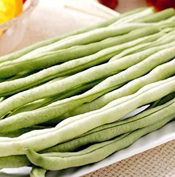 5 PC Bonsai Bean Köstliche Gemüse Phaseolus Vulgaris Pflanze Grüne Bohnen natürliche Wachstum Gesunde Ernährung Garten Planta: 5