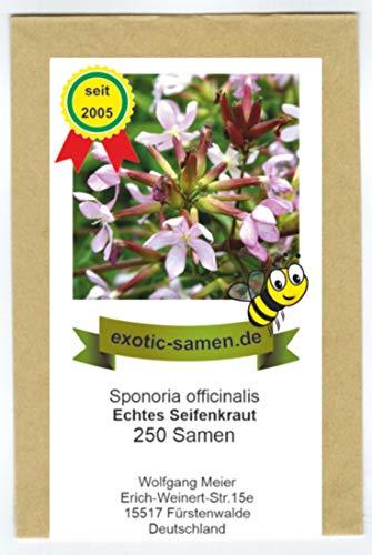Seifenkraut - Saponaria officinalis - Bienenweide - Zier- u. Arzneipflanze - 200 Samen