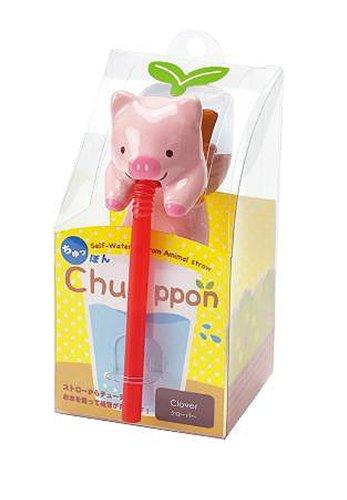 chuppon – Cochon – Trèfle Blanc