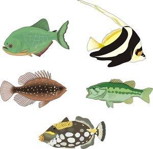 Smarts-Art Sticker setf6Stickers poissons tropicaux en X 5toute utilisation de Salle de Bain