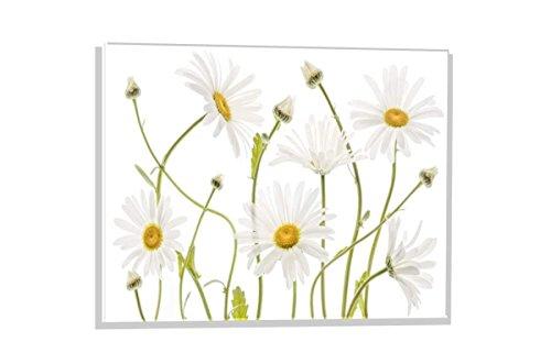 kunst für alle Glasbild: Mandy Disher Ox Eye Daisies, Hochwertiges Wandbild, Brillanter Druck auf Echtglas, 60x40 cm (Ox Daisy Eye)