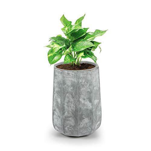 Blumfeldt Decaflor - Bac à fleurs, Bac à fleurs décoratif, 40 x 50 x 40 cm, Fibre de verre, Intérieur et extérieur, Solide et léger, gris clair