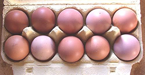 10+2 Hühner-Eier braun aus Freiland Haltung, direkt vom Bauernhof, tages-frische...
