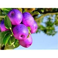 Vista 50 graines/Sachet coloré Rare graines de pommier série Bonsai * Parfum, SUCRÉ, Crisp * Graines de jardinage * Plus Cadeau