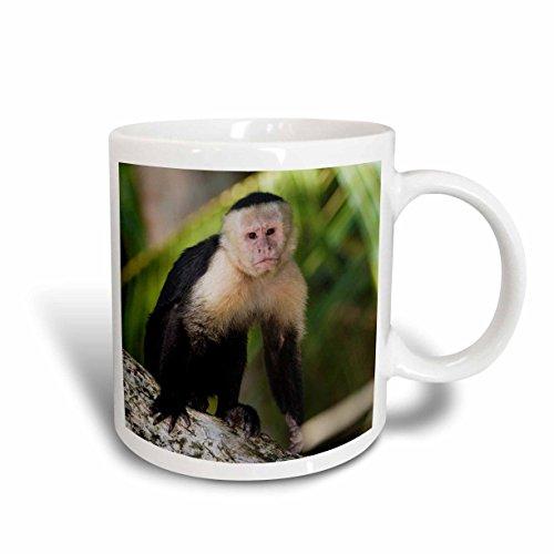 3D Rose 84640_5 White faced Capuchin Affe, Costa Rica NA02 RNU0827 Rolf Nussbaumer Tasse aus Keramik, zweifarbig, Rot