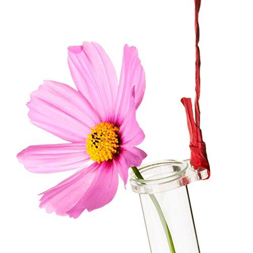 Tuuters 25x Reagenzglashalter für Blumen mit Reagenzglas ☆ Blumenvase ☆ Vase Hochzeit ☆ Hochzeitsdeko (Glas-vase Blumen Mit)