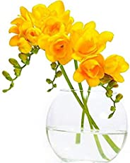 "Kriti Kalash! Freesia Flower Bulbs Collection of 14 Bulbs ""Gold Yellow-Color"""