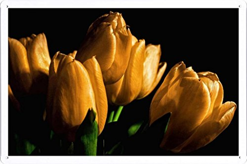 metallo-poster-targa-in-metallo-piastra-flower-tin-sign-tulips-yellow-flowers-buds-light-black-backg