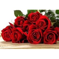 100pcs Rose Samen, Seltene exotische Samen Chinese Rose Blumensamen für Pflanzen Hausgarten, 24 Farben 11